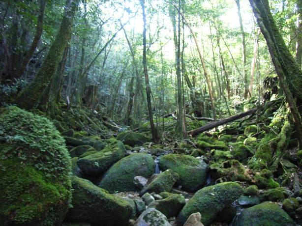 Yakushima_2008_36_178_3