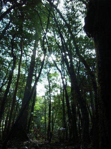 Yakushima_2008_36_200_2