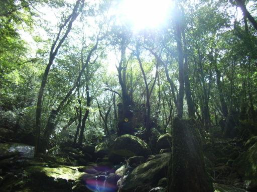 Yakushima_2008_36_215_4
