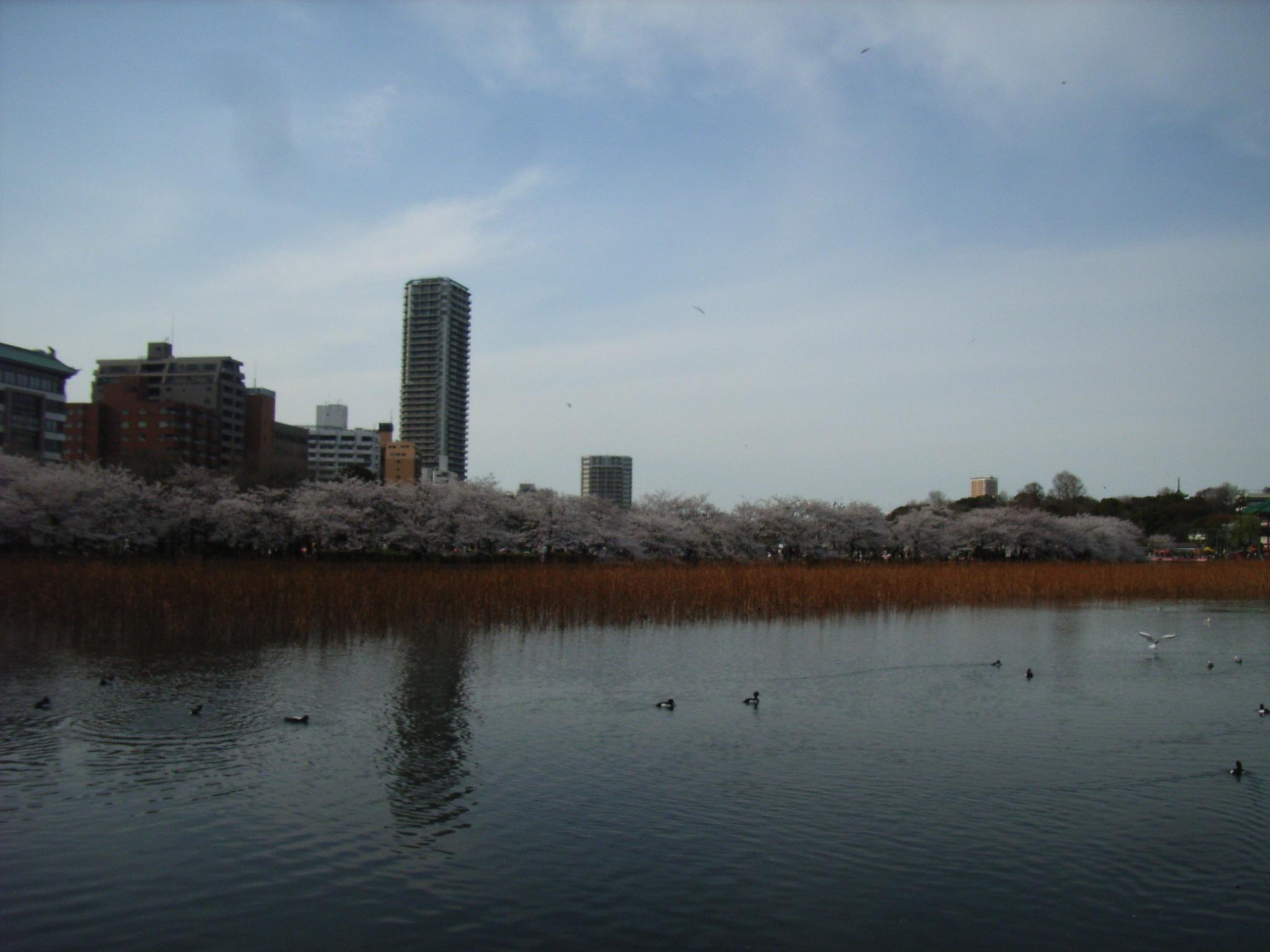 Ryo_march_084
