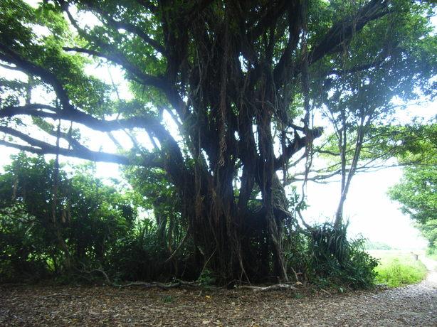 Okinawa_050_3